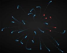html5 canvas绘制发散爆炸的游动蛇虫动画代码、跟随鼠标移动